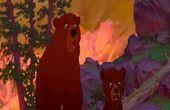 Bjørnebrødre